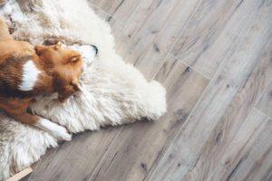 Flooring Trends for 2019 sydney